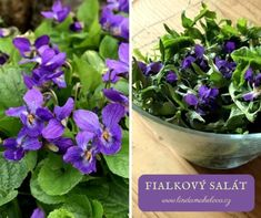 Salát s fialkou Parsley, Cabbage, Herbs, Vegetables, Food, Clean Foods, Food And Drinks, Health, Essen