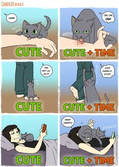 9 New Comics All Cat Owners Will Understand! - Patrizia Eckerl - - 9 New Comics All Cat Owners Will Understand! 9 New Comics All Cat Owners Will Understand! Memes Humor, Cat Memes, Funny Humor, Humor Quotes, Pet Quotes, Cute Funny Animals, Funny Cute, Cute Cats, Hilarious