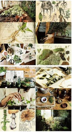 Hogwarts subjects | Herbology:        Herbology is the study of magical and mundane plants and fungi, making it the wizarding equivalent to botany. Herbology is a core class and subject taught at Hogwarts School of Witchcraft and Wizardry, in which students learn to care for and utilize plants, learn about their magical properties and what they are used for. Many plants provide ingredients for potions and medicine, while others have magical effects of their own right.