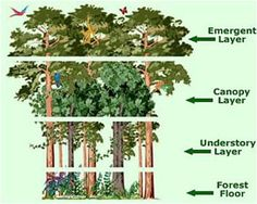 Plants of the Tropical Rainforest