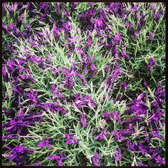 Flores da primavera à sua espera na Jardiland.
