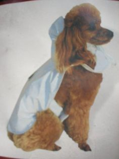 Doggiduds Pastel Raincoat BLUE Size Small -- Click image for more details. (This is an affiliate link and I receive a commission for the sales) Dog Coats, Doggies, Raincoat, Pastel, Amazon, Pets, Awesome, Link, Check