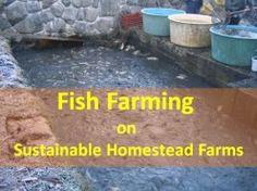 Aquaculture: Fish Farming on Sustainable Homestead Farms Sustainable Farming, Urban Farming, Sustainability, Sustainable Living, Catfish Farming, Aqua Culture, Agriculture Farming, Goat Farming, Homestead Farm