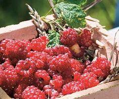 Rustica.fr - Fruits au potager - Framboise