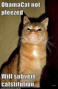 Obama Cat not pleased