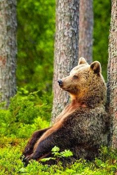 An Early Morning Walk - animals-are-hype: thinking mama bear by. Nature Animals, Animals And Pets, Baby Animals, Funny Animals, Cute Animals, Baby Pandas, Wild Animals, Photo Animaliere, Bear Art