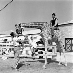 Ringling Bros. and Barnum & Bailey Circus. 1949