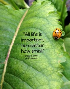 """All life is important, no matter how small."" // if one life matters, all lives matter Words Quotes, Me Quotes, Sayings, Nature Quotes, Mother Earth, Decir No, Humor, Affirmations, Quotations"