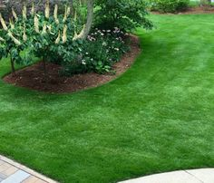 This calendar of suggested management practices is designed to be a general guide in the care of your zoysiagrass lawn. Types Of Grass, Types Of Soil, Soil Type, No Grass Backyard, Backyard Landscaping, Gravel Patio, Pea Gravel, Zoysia Grass, Lawn Fertilizer