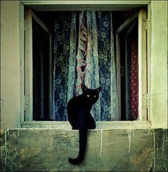 Pretty black kitty