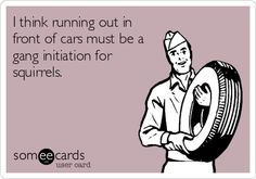I think running out in front of cars must be a gang initiation for squirrels.
