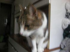 Pépère le chat Abuelito el gato Opa die Katze pépère il gatto סבא החתול ( שוחח ) جده CAT (دردشة ) Vovô o gato (conversa) Grandpa the cat(chat) Дедуша кот (чат) おじいさん、猫(チャット) Dol Chats errants Saint-André de Sangonis Docteur Thierry GUY Politique