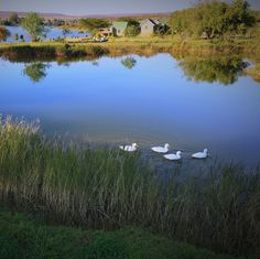 Warmest Winter Special Rondeberg Holiday Resort — Last few days of our Fantastic Winter Special!  More info on our website at www.rondeberg.com  or contact Reservations at 021 1003689 Holiday Resort, Breeze, Places To Visit, River, Warm, Mountains, Website, Outdoor, Outdoors