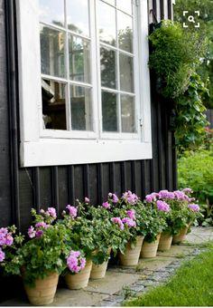 of Pink Geraniums. of Pink Geraniums.of Pink Geraniums. Beautiful Gardens, Beautiful Flowers, Simply Beautiful, Dream Garden, Home And Garden, Pink Geranium, Plantar, Plantation, Garden Pots