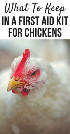 Chickens get sick sometimes. Most of the time you can administer first aid to yo. - Chickens get sick sometimes. Most of the time you can administer first aid to your backyard flock a - Raising Backyard Chickens, Backyard Chicken Coops, Chicken Coop Plans, Keeping Chickens, Building A Chicken Coop, Diy Chicken Coop, Pet Chickens, Backyard Farming, Chicken Ideas