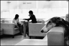 Elliott ERWITT :: Dog Cafe, Seoul, Korea, 2007