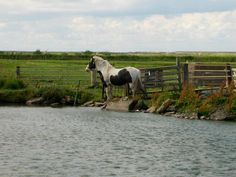 As we cycle along the North Norfolk Coast, our route takes us inland across pastureland, and then to a small pond, where we see a single horse standing looking eastward.  We get closer and stop, but the horse remains motionless and seemingly intent on some far off vision. We notice that he is standing by the fence that comes down to the pond, as if his intention was to go further, but his movement has been stopped.......