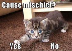 Cause mischief? #catoftheday