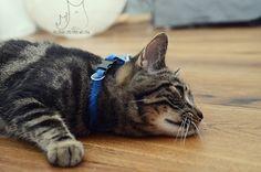 Ryś #cat