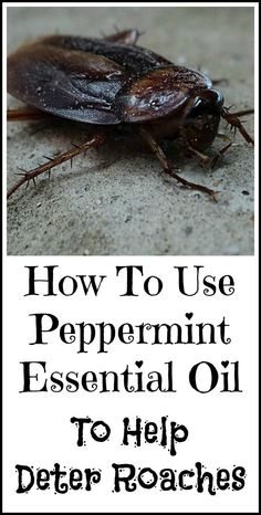 How to use peppermint essential oil to help deter roaches.
