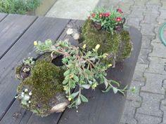 Hohler bepflanzter Ast