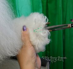 Pet Grooming: The Good, The Bad, & The Furry: Saving Matted Feet= how to