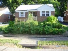 frontyard gardens ferguson | City officials say this garden poses safety and erosion concerns.