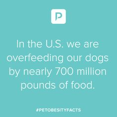 Spreading Pet Obesity Awareness to all Pet owners. Heath Care, Pet Health, Pinterest Account, Weight Management, Health And Safety, Shit Happens, Dog, Pets, Diy Dog