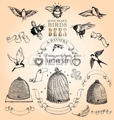 Hand Drawn Birds, Bees and Banners Vintage Style Vector Set Stock Vector