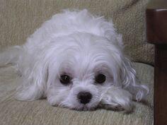 Gifblinking puppy gif - SomeGif.com