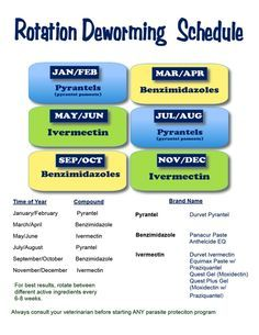 Deworming Schedule for horses