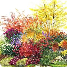Massif de 10 plantes vivaces couvre-sol