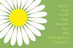 daisies are the friendliest flower