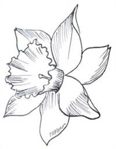 Print Coloring Page And Book Daffodil Flowers Coloring Pages For Kids Of All Ages Updated On