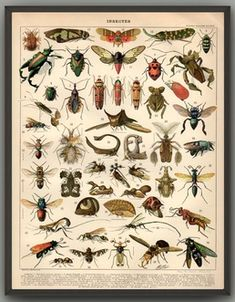 (Unframe, Print Only) Insects Canvas Print Book Illustration Botanical Wall Art Pictures