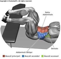 Crunch, legs on flat bench Fitness Workouts, At Home Workouts, Fitness Tips, Muscle Fitness, Mens Fitness, Gain Muscle, Sport Motivation, Fitness Motivation, Sixpack Workout