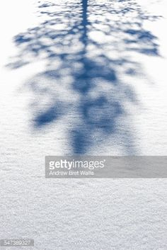 Stock Photo : Shadow of a pine tree in the snow