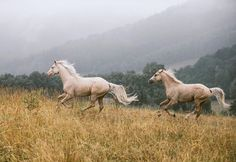 dixie gypsy - Belezza,animales , salud animal y mas All The Pretty Horses, Beautiful Horses, Animals Beautiful, Horse Photos, Horse Pictures, Horse Girl, Horse Love, Zebras, Animals And Pets