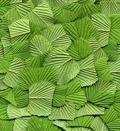 by horticultural art via flickr