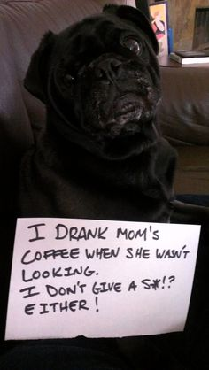 Dog shame.  This is Penny when I attempt to drink any alcohol