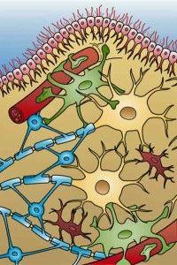 Low dose naltrexone for Fibromyalgia treatment. Stanford study shows promise.
