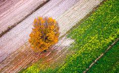 http://fotolotnia.pl/jesienny-koloryt/samotne-drzewo-na-polach-jesien.jpg