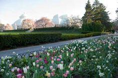 The Seasonal Walk Garden (NYBG) Designed by Piet Oudolf & Jacqueline van der Kloet in 2013. Photo courtesy of the Netherlands Flower Bulb Information Center/North America _/\/\/\/\/\_
