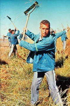 Paul Newman in Cool Hand Luke                                                                                                                                                                                 More