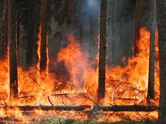 Rp) *coughs running along with the woodland animals fleeing the fire. I've lasted much longer then a normal person, but in slowing down. Becoming wobbly as I trot slowly through. Cough. My eyes and lungs sting from the smoke. I lean on tree for second.