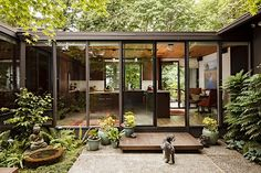 Foliage and a sliding door, doggie, and nice looking kitchen. The dark (black or bronze) framing around windows.