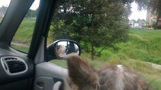 Having fun in a car