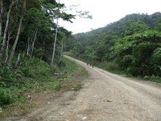 Crossing the jungle in west papua