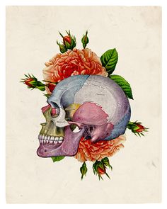 The Beautiful Human Skull With Flowers Antique Illustration 8 x 10 Giclee Art Print Upcled Collage Recycled Book Art Buy 2 Get 1 FREE
