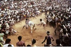 India, Tamil Nadu State, Madurai, Bull taming at Alanganallur, S by GHASSEN MARZOUKI on 500px